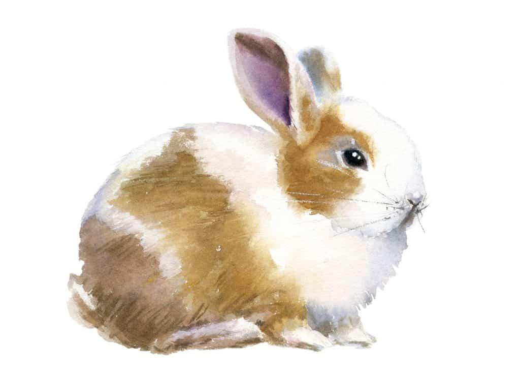 Kako nacrtati zeca